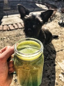 puppy & smoothie